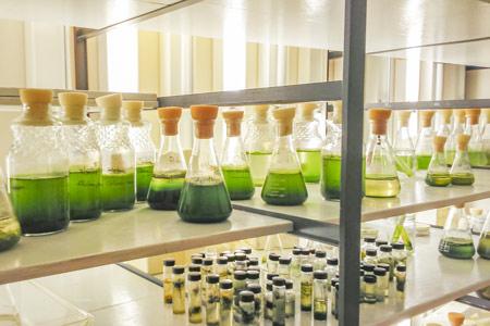 algal samples in the Algal culture facility