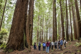 A class of students in the forest surrounded by large redwood trees