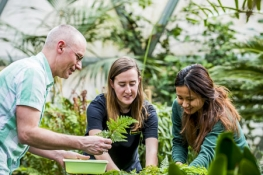Professor Tomescu working with two students in the greenhouse