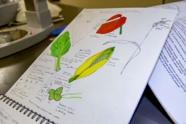 A student drawing of plants